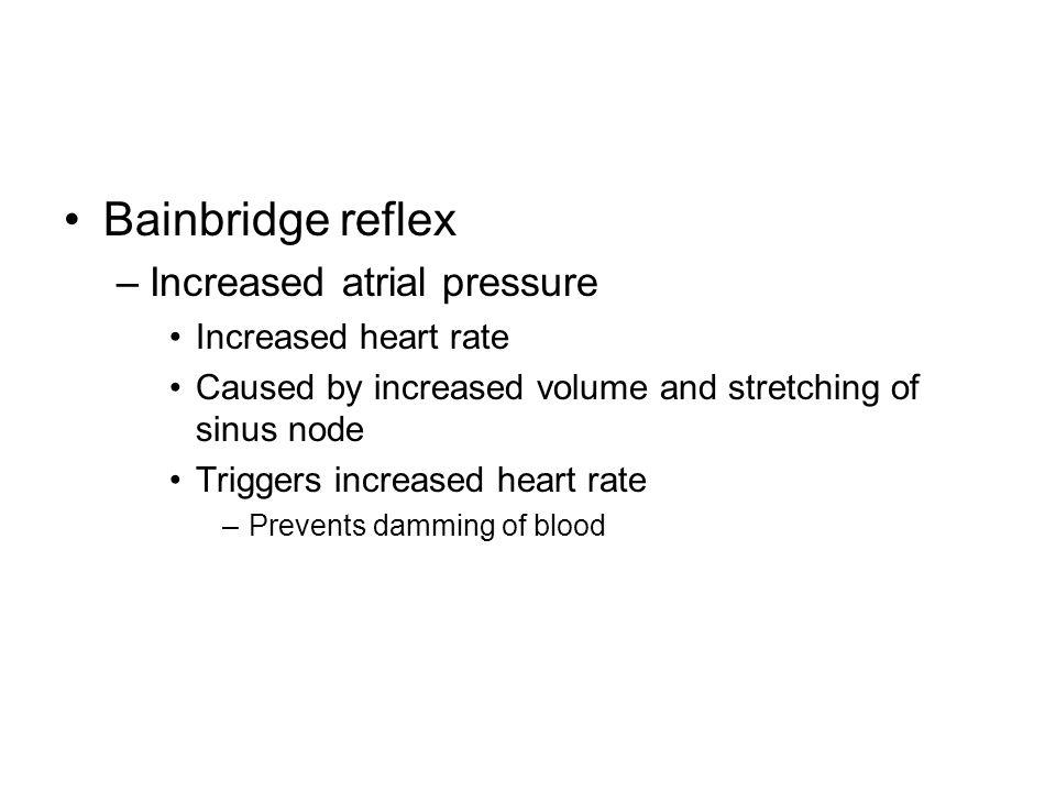 Bainbridge reflex –Increased atrial pressure Increased heart rate Caused by increased volume and stretching of sinus node Triggers increased heart rat