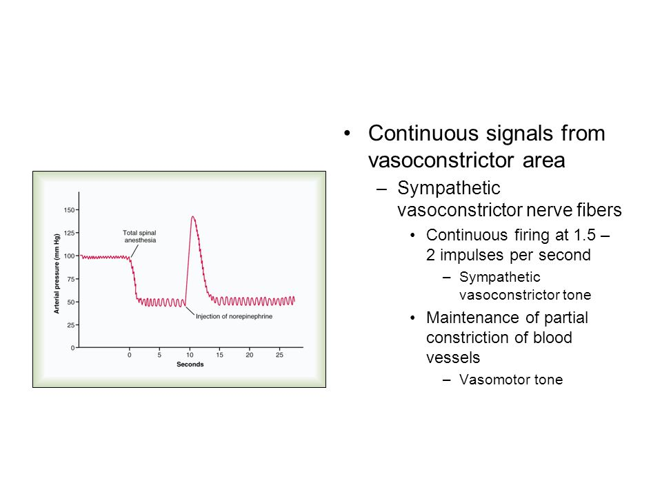 Continuous signals from vasoconstrictor area –Sympathetic vasoconstrictor nerve fibers Continuous firing at 1.5 – 2 impulses per second –Sympathetic v