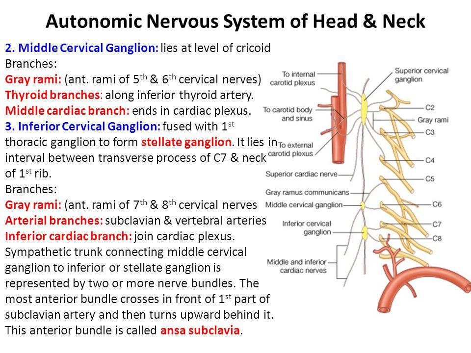 Autonomic Nervous System of Head & Neck 2.