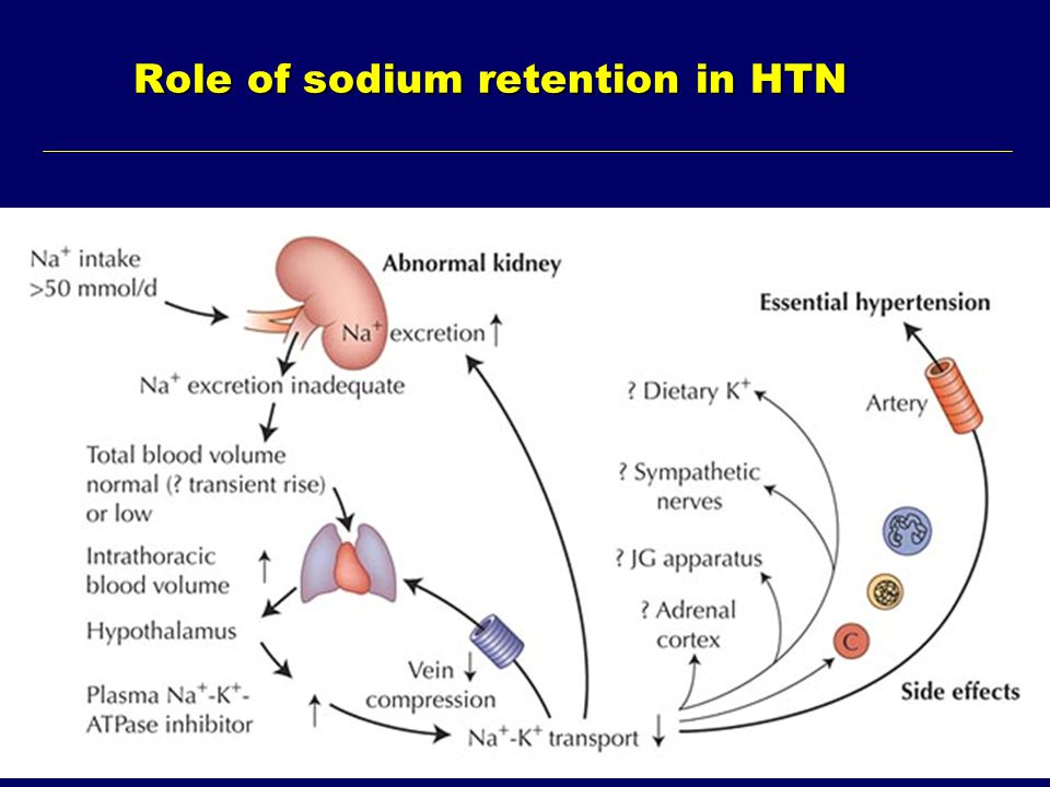 Role of sodium retention in HTN