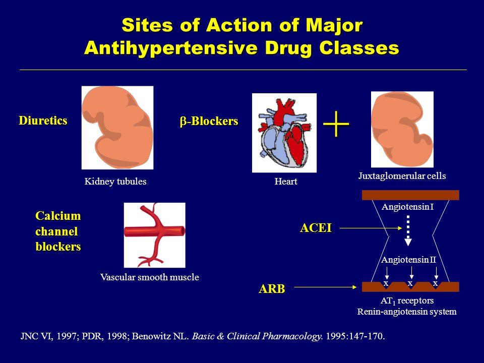 Sites of Action of Major Antihypertensive Drug Classes Diuretics ACEI Calciumchannelblockers +  -Blockers ARB Juxtaglomerular cells HeartKidney tubules Vascular smooth muscle JNC VI, 1997; PDR, 1998; Benowitz NL.