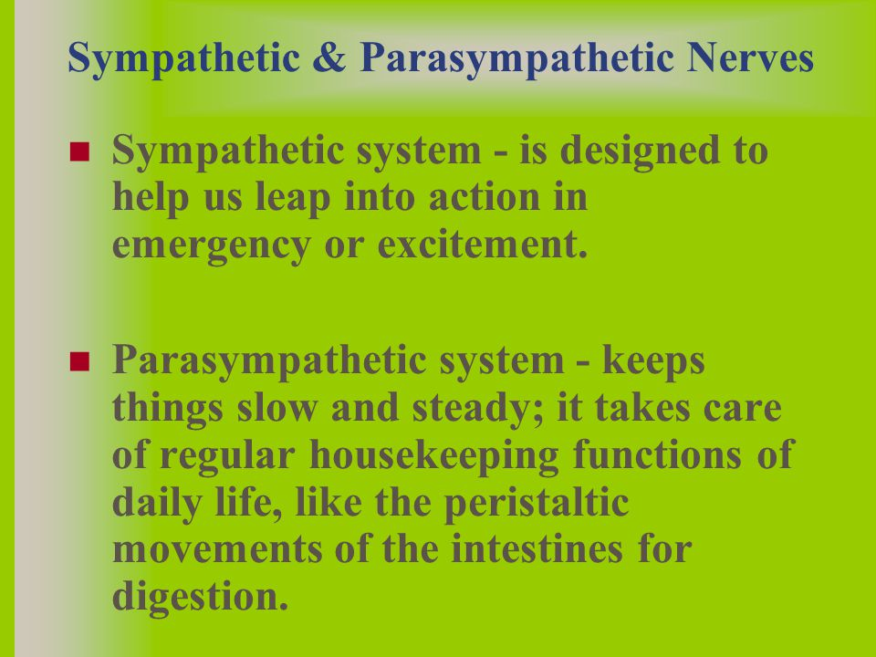 Sympathetic & Parasympathetic Nerves Sympathetic system - is designed to help us leap into action in emergency or excitement.