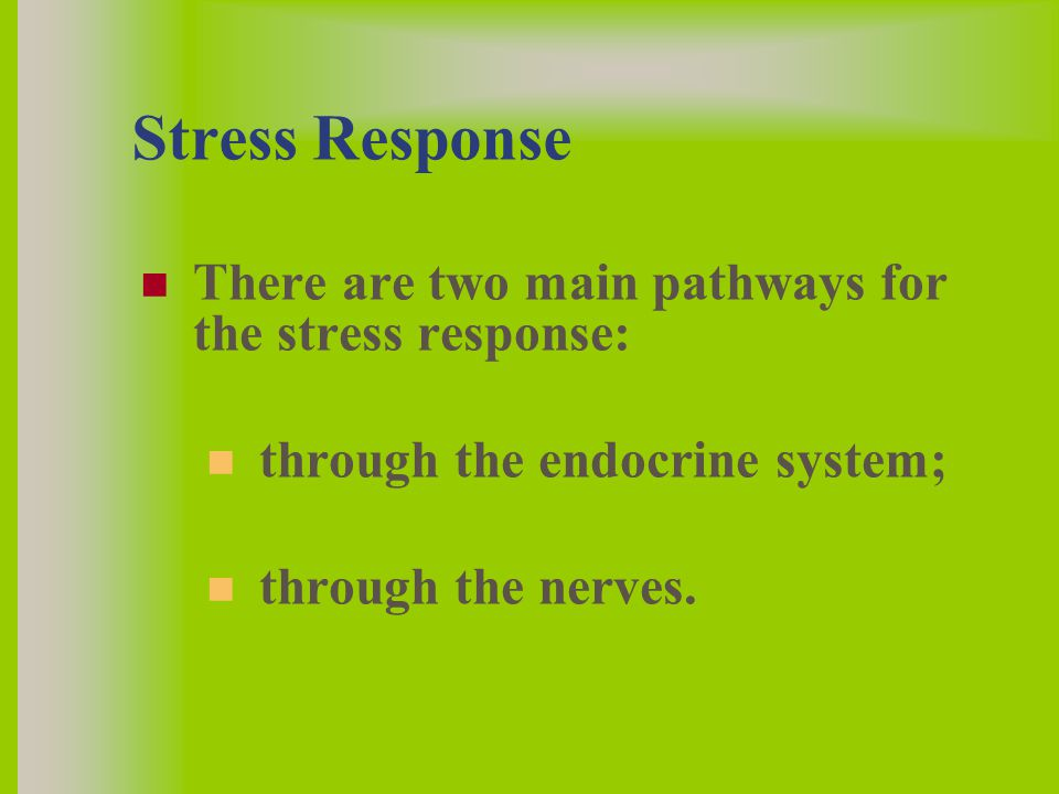 Stress Response There are two main pathways for the stress response: through the endocrine system; through the nerves.