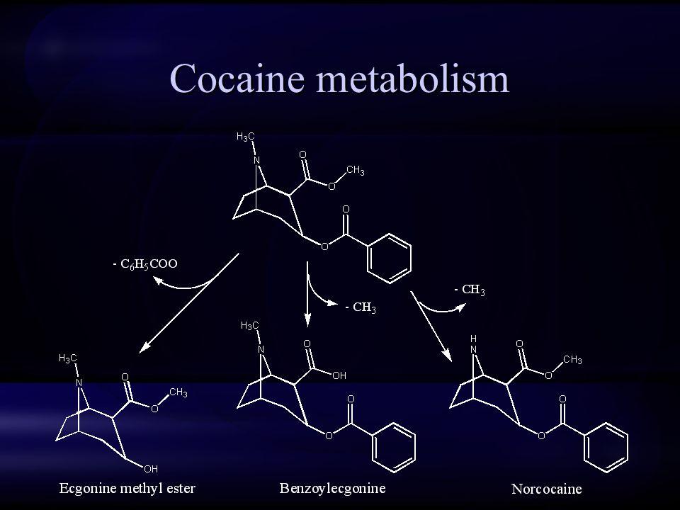 Cocaine metabolism