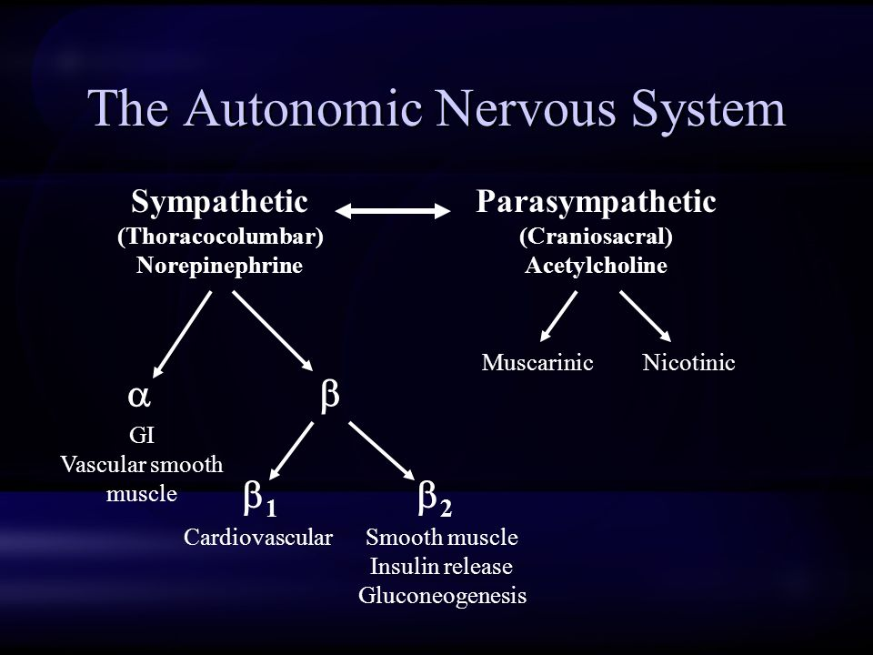 The Autonomic Nervous System Sympathetic (Thoracocolumbar) Norepinephrine Parasympathetic (Craniosacral) Acetylcholine   22 11 CardiovascularSmooth muscle Insulin release Gluconeogenesis GI Vascular smooth muscle MuscarinicNicotinic