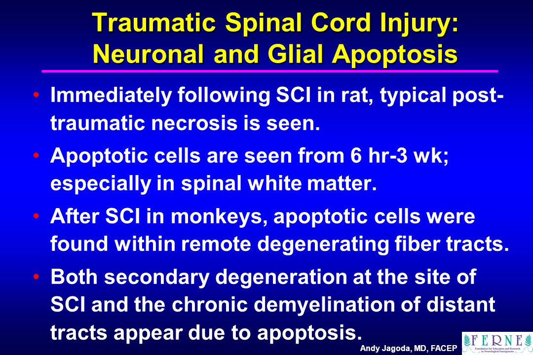 Andy Jagoda, MD, FACEP Traumatic Spinal Cord Injury: Neuronal and Glial Apoptosis Immediately following SCI in rat, typical post- traumatic necrosis is seen.