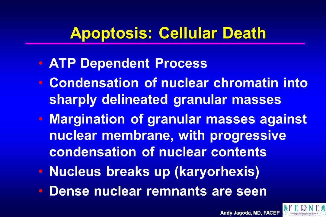 Andy Jagoda, MD, FACEP Apoptosis: Cellular Death ATP Dependent Process Condensation of nuclear chromatin into sharply delineated granular masses Margi