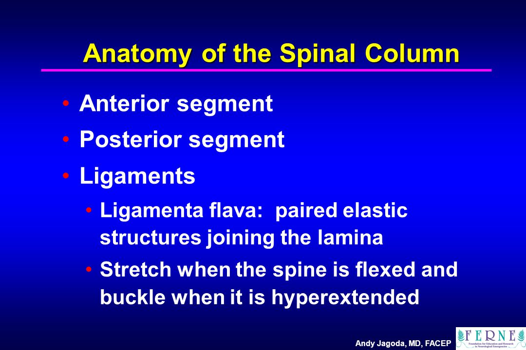 Andy Jagoda, MD, FACEP Anatomy of the Spinal Column Anterior segment Posterior segment Ligaments Ligamenta flava: paired elastic structures joining th