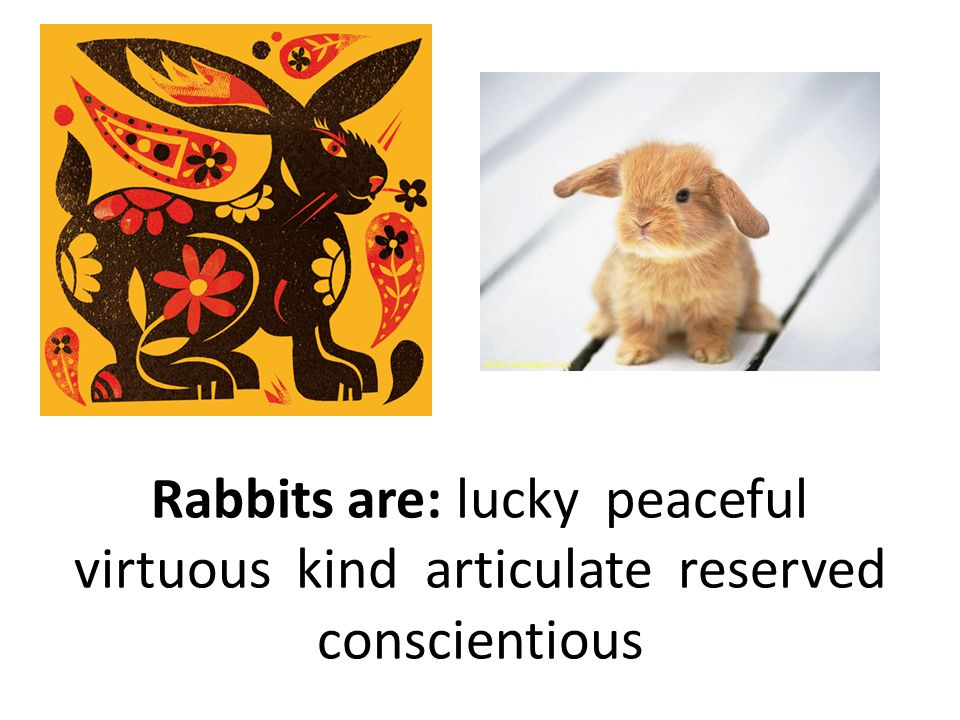 Rabbits are: lucky peaceful virtuous kind articulate reserved conscientious