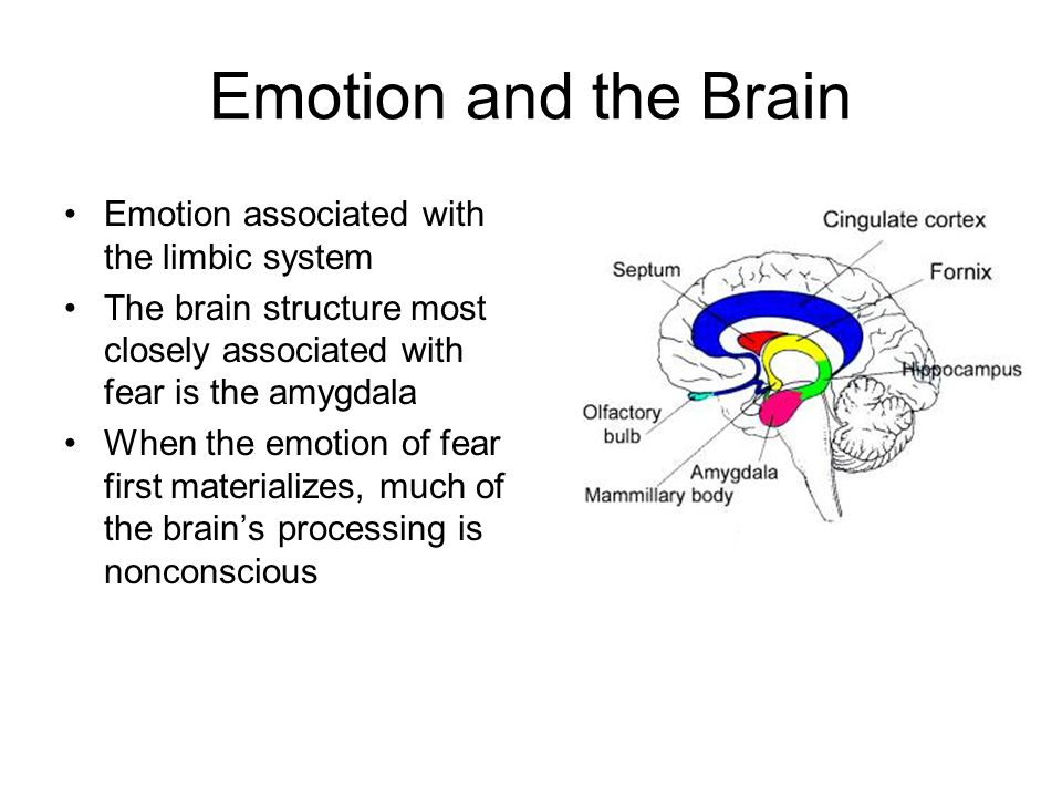 Emotion and the Brain Emotion associated with the limbic system The brain structure most closely associated with fear is the amygdala When the emotion of fear first materializes, much of the brain's processing is nonconscious