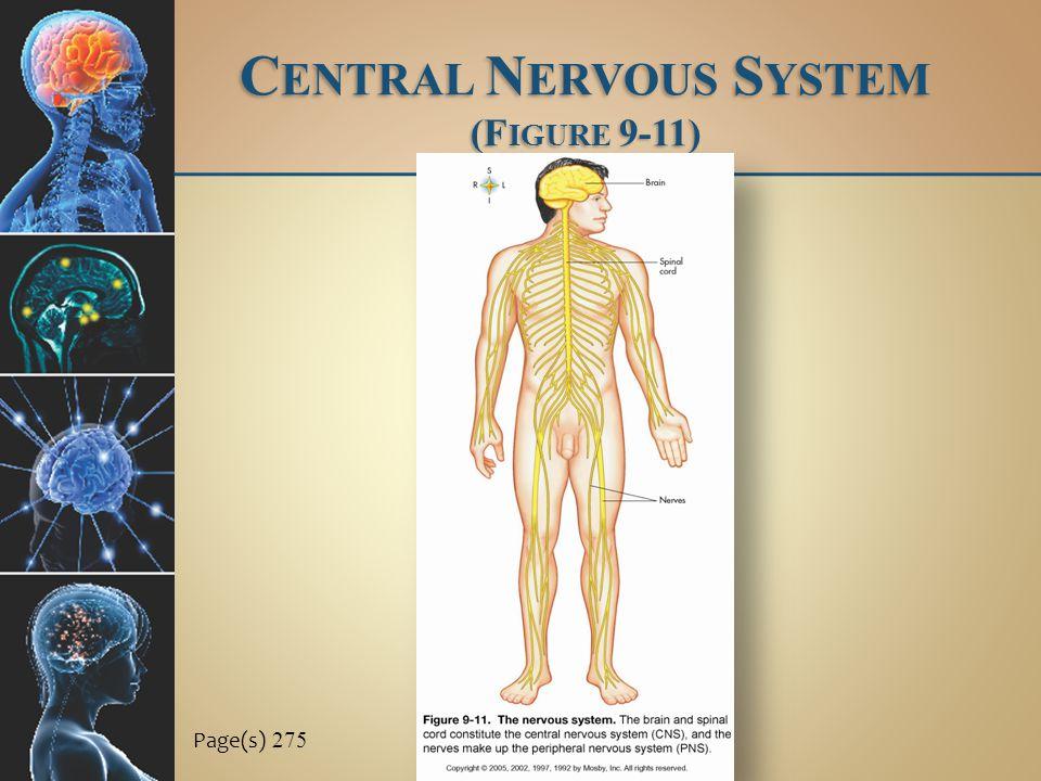 C ENTRAL N ERVOUS S YSTEM (F IGURE 9-11) Page(s) 275