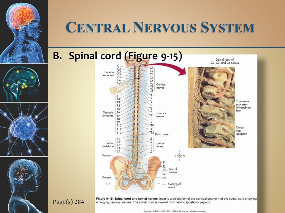 C ENTRAL N ERVOUS S YSTEM Page(s) 284 B.Spinal cord (Figure 9-15)