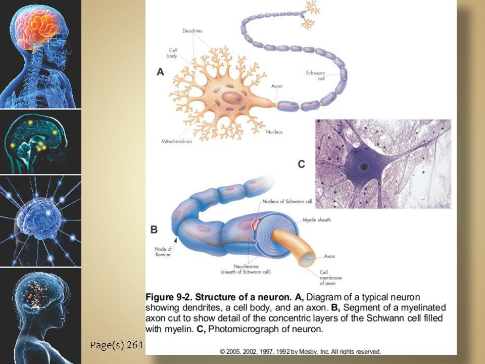 C ELLS OF THE N ERVOUS S YSTEM B.Glia (neuroglia) 1.
