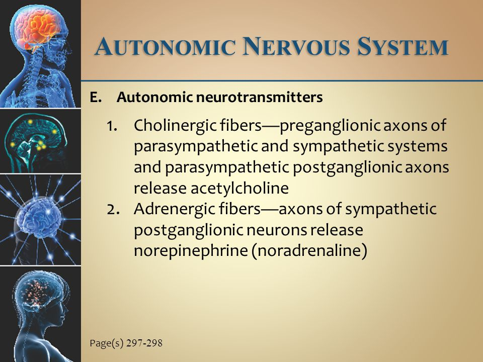 A UTONOMIC N ERVOUS S YSTEM E.Autonomic neurotransmitters 1.