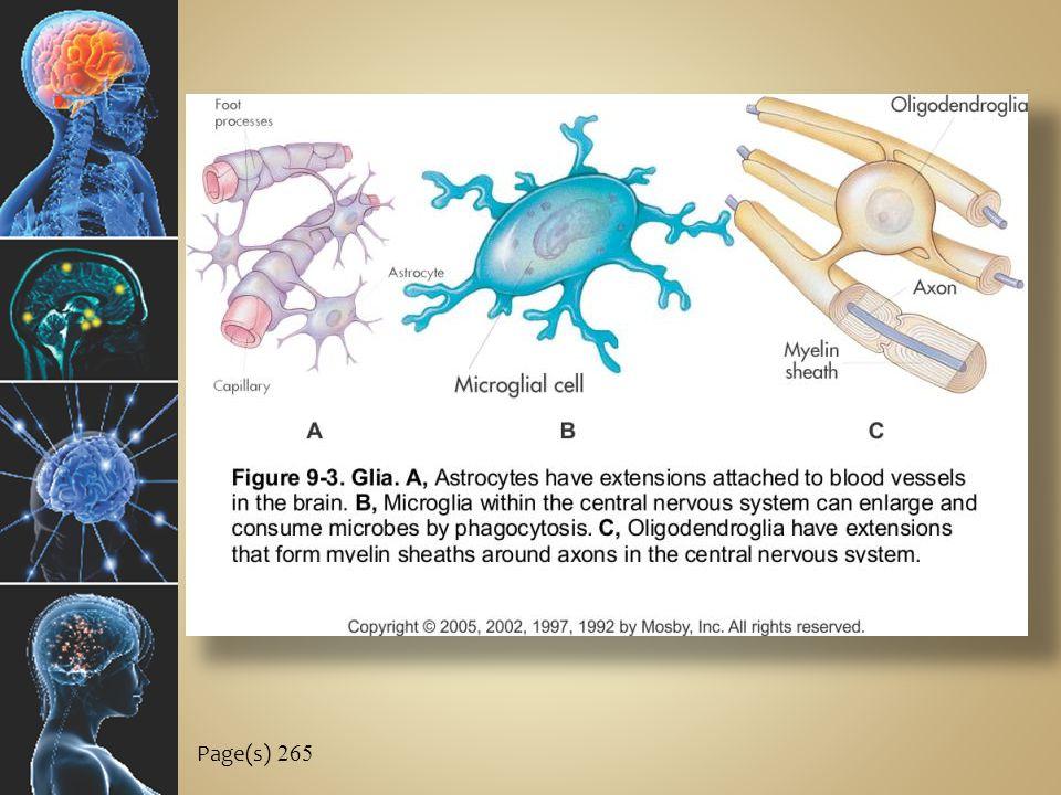 C ELLS OF THE N ERVOUS S YSTEM C.Disorders of nervous tissue 1.