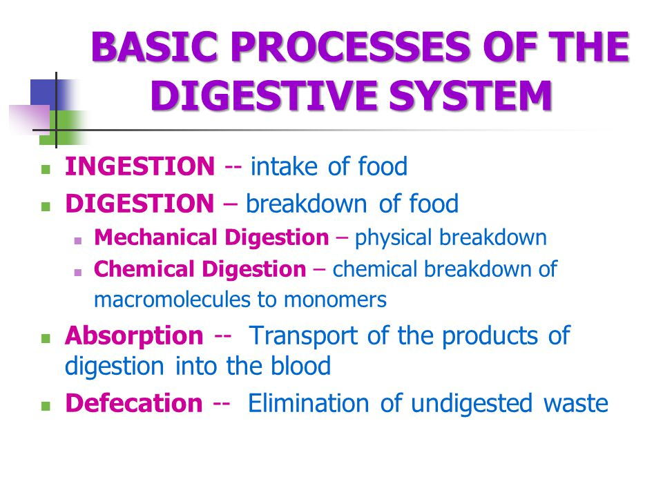 BASIC PROCESSES OF THE DIGESTIVE SYSTEM INGESTION -- intake of food DIGESTION – breakdown of food Mechanical Digestion – physical breakdown Chemical Digestion – chemical breakdown of macromolecules to monomers Absorption -- Transport of the products of digestion into the blood Defecation -- Elimination of undigested waste