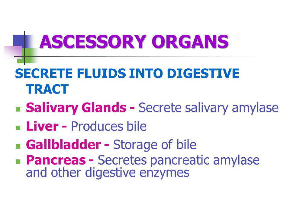 ASCESSORY ORGANS SECRETE FLUIDS INTO DIGESTIVE TRACT Salivary Glands - Secrete salivary amylase Liver - Produces bile Gallbladder - Storage of bile Pancreas - Secretes pancreatic amylase and other digestive enzymes