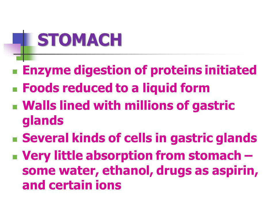 STOMACH Enzyme digestion of proteins initiated Foods reduced to a liquid form Walls lined with millions of gastric glands Several kinds of cells in gastric glands Very little absorption from stomach – some water, ethanol, drugs as aspirin, and certain ions