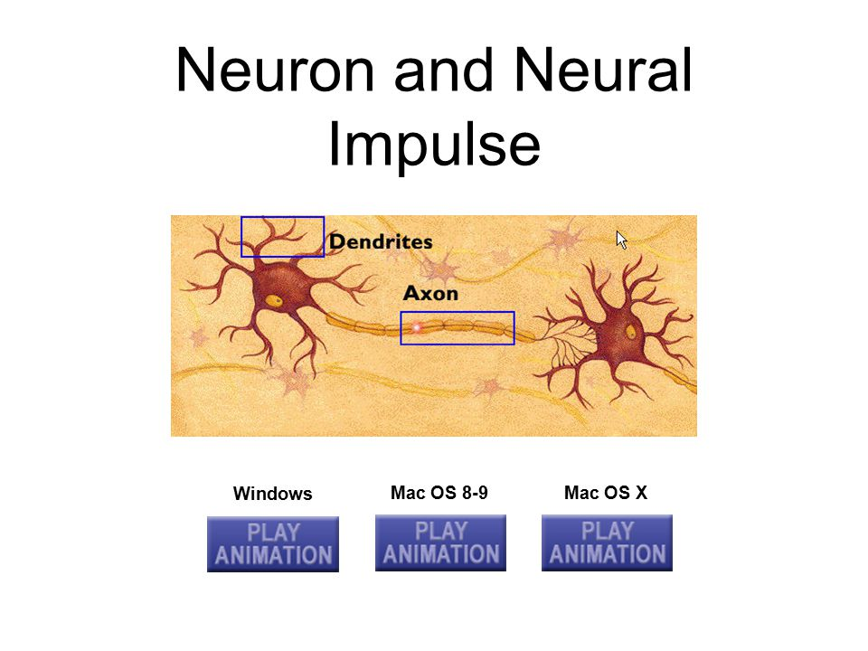 Neurotransmitters Chemicals that alter activity in neurons; brain chemicals –Acetylcholine: Activates muscles –Dopamine: Muscle control –Serotonin: Mood and appetite control Receptor Site: Areas on the surface of neurons and other cells that are sensitive to neurotransmitters or hormones