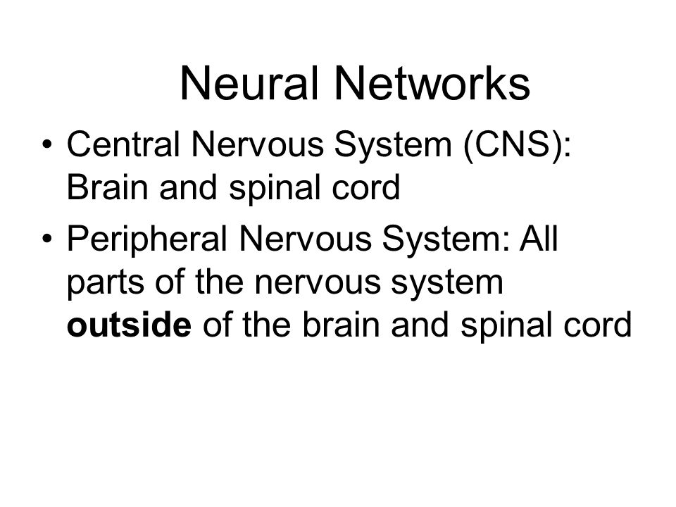 Two Divisions of the Peripheral Nervous System Somatic System: Links spinal cord with body and sense organs; controls voluntary behavior Autonomic System: Serves internal organs and glands; controls automatic functions such as heart rate and blood pressure