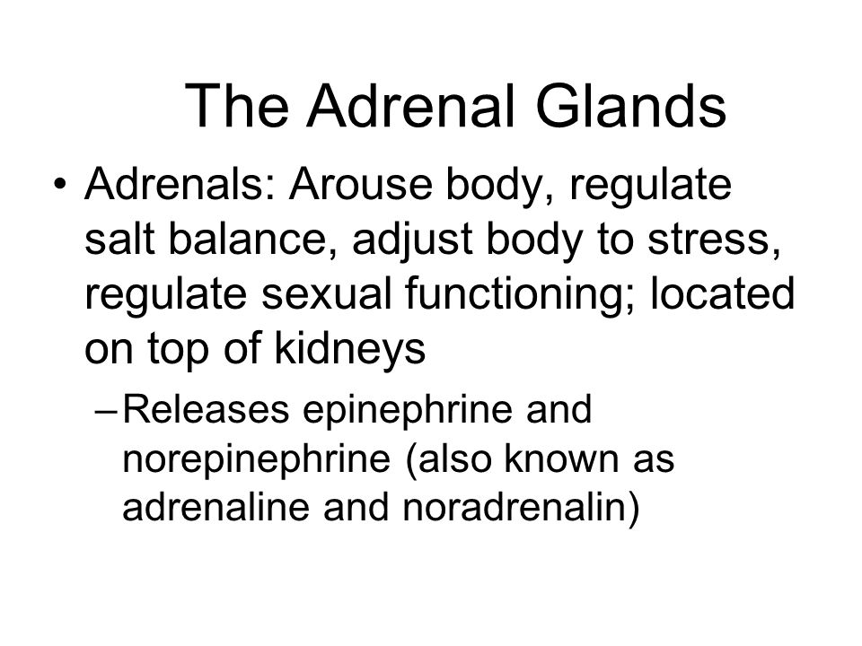The Adrenal Glands (cont.) Adrenal Medulla: Source of epinephrine and norepinephrine Adrenal Cortex: Produces hormones known as corticoids –Regulate salt balance –Deficiency in some types will cause powerful salt cravings in humans