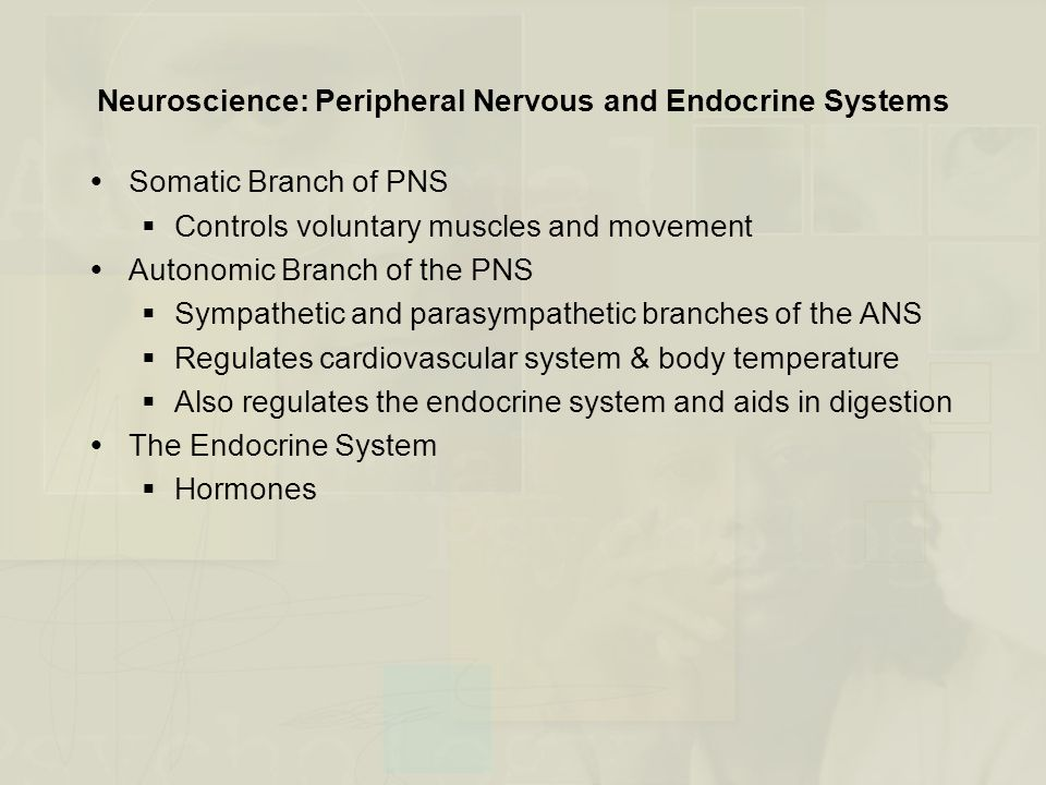 Neuroscience: Peripheral Nervous and Endocrine Systems  Somatic Branch of PNS  Controls voluntary muscles and movement  Autonomic Branch of the PNS