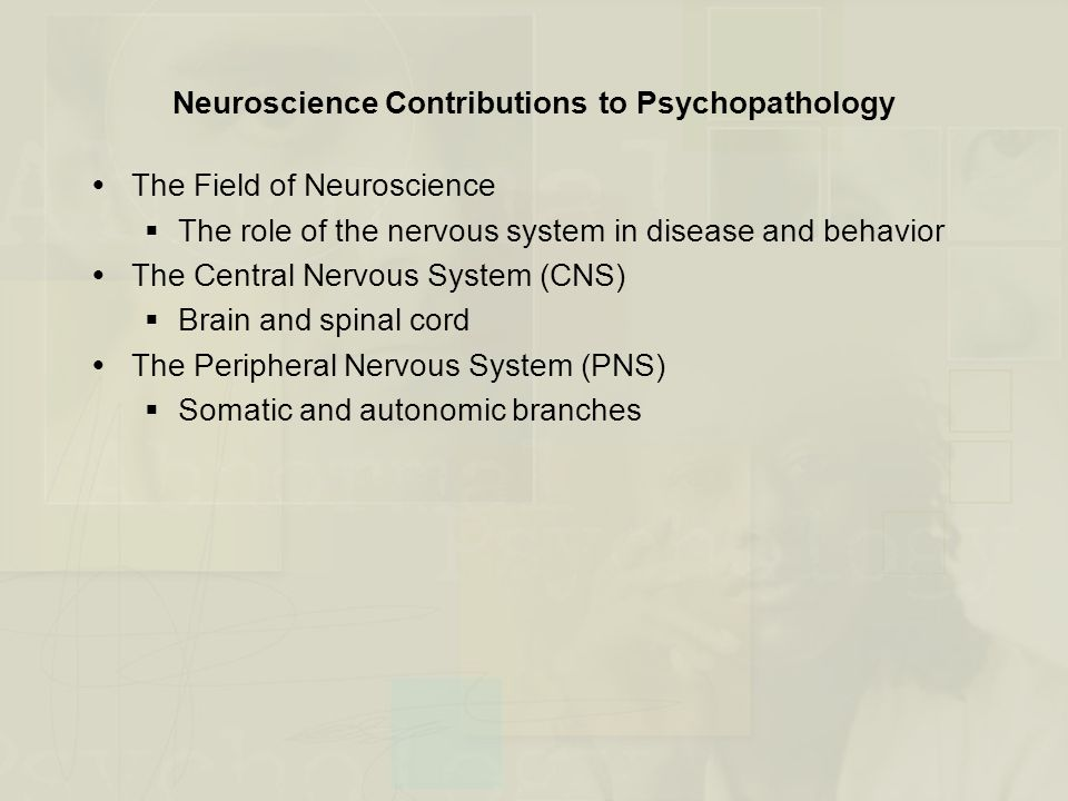 Neuroscience Contributions to Psychopathology (cont.) Figure 2.4 Divisions of the nervous system (from Goldstein, 1994)