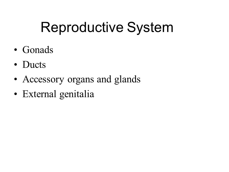 Gonads Ducts Accessory organs and glands External genitalia Reproductive System