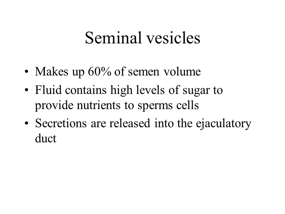 Seminal vesicles Makes up 60% of semen volume Fluid contains high levels of sugar to provide nutrients to sperms cells Secretions are released into th