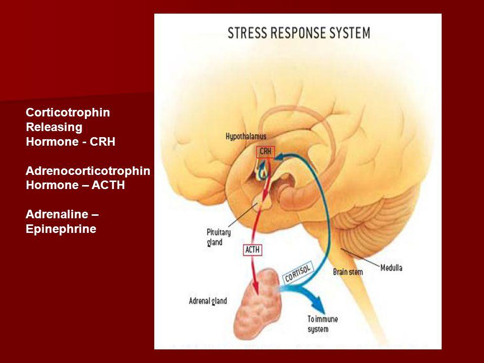 Corticotrophin Releasing Hormone - CRH Adrenocorticotrophin Hormone – ACTH Adrenaline – Epinephrine