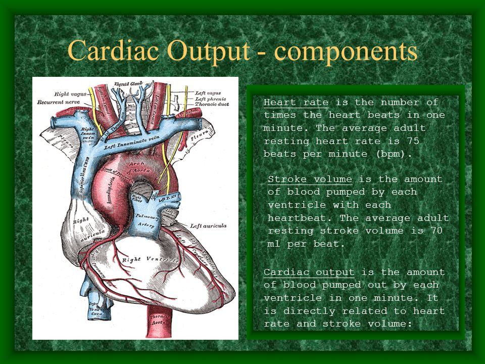 Cardiac Output - components Heart rate is the number of times the heart beats in one minute.