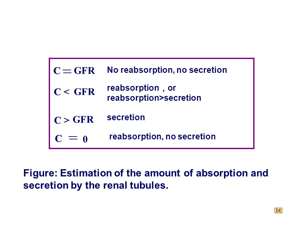 No reabsorption, no secretion C GFR C < GFR reabsorption , or reabsorption>secretion C > GFR secretion C 0 reabsorption, no secretion Figure: Estimation of the amount of absorption and secretion by the renal tubules.