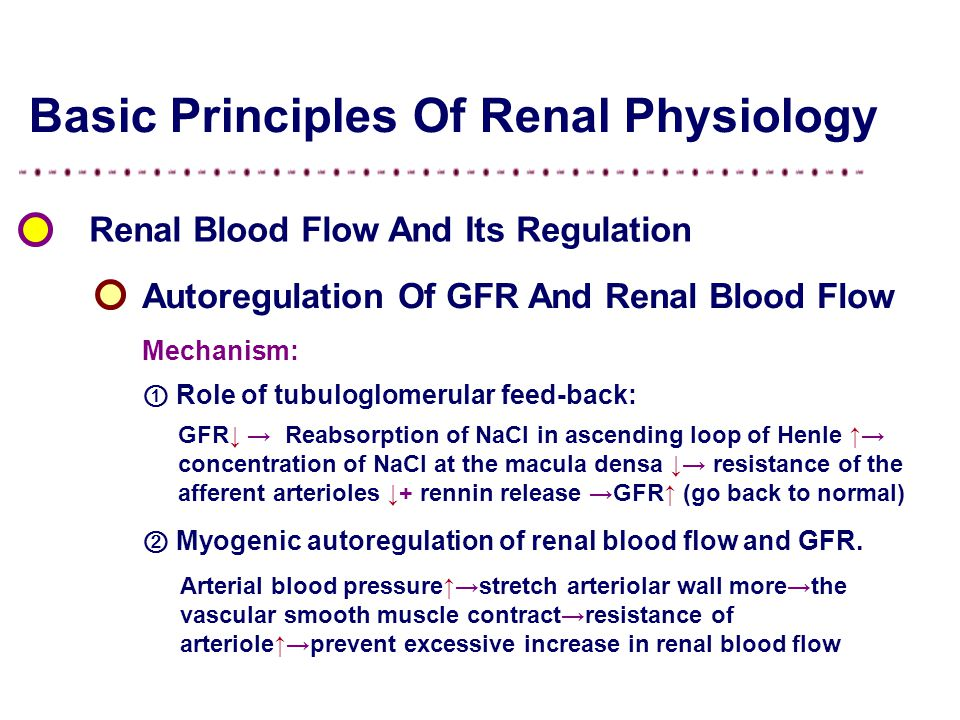 Basic Principles Of Renal Physiology Renal Blood Flow And Its Regulation Autoregulation Of GFR And Renal Blood Flow Mechanism: ② Myogenic autoregulation of renal blood flow and GFR.