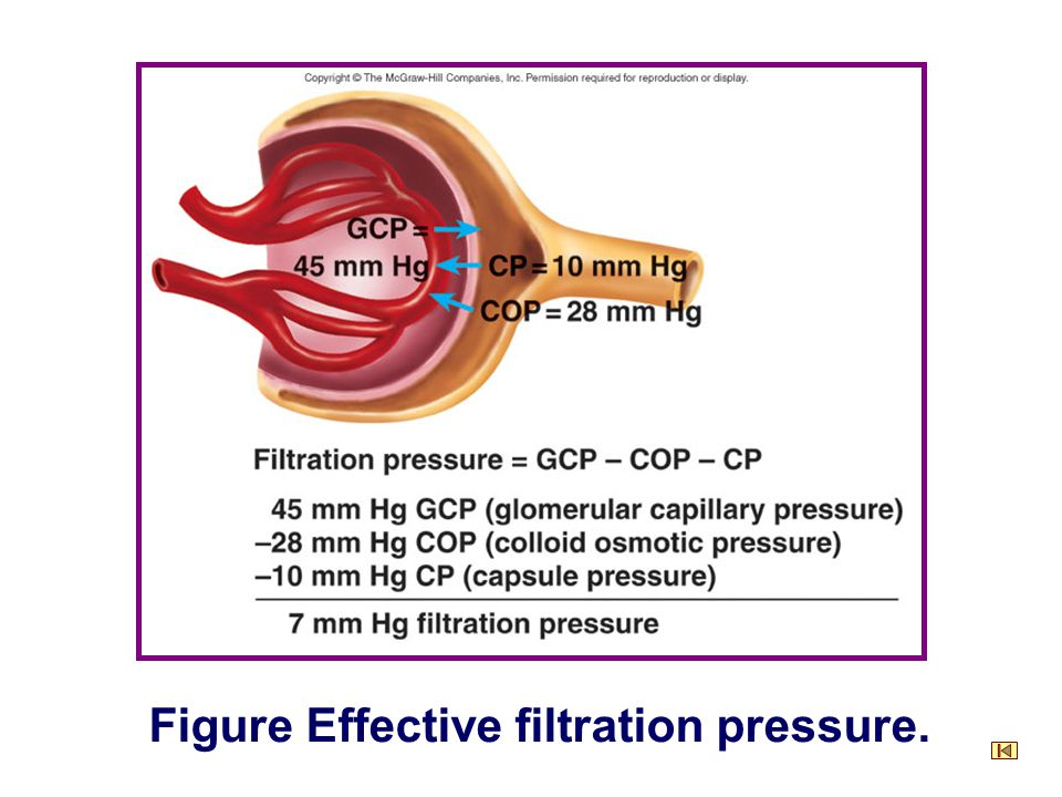 Figure Effective filtration pressure.