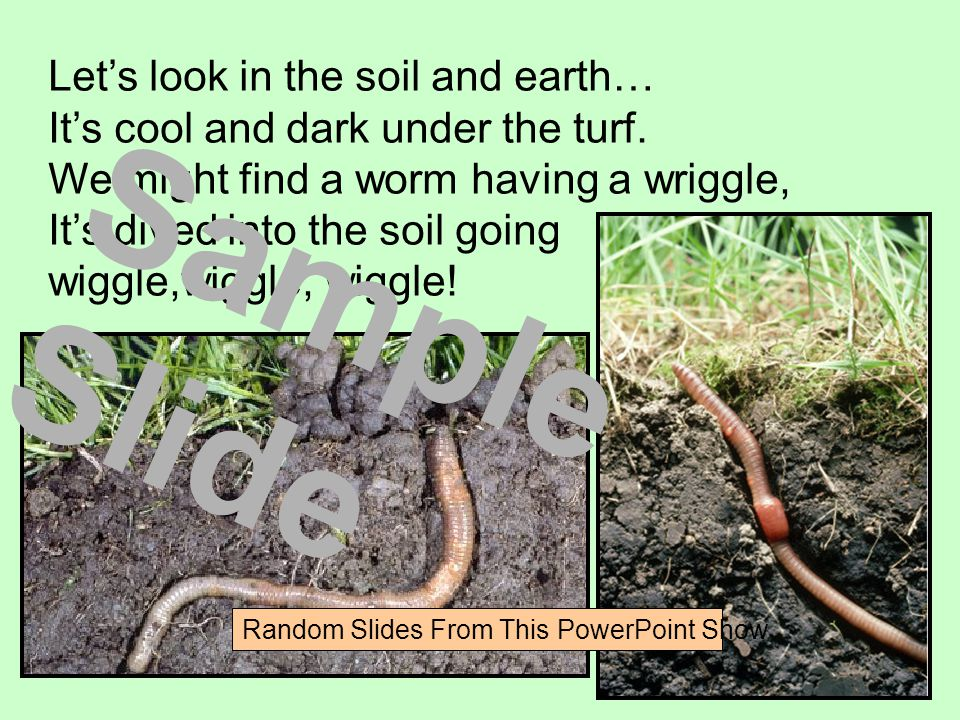 Let's look in the soil and earth… It's cool and dark under the turf.