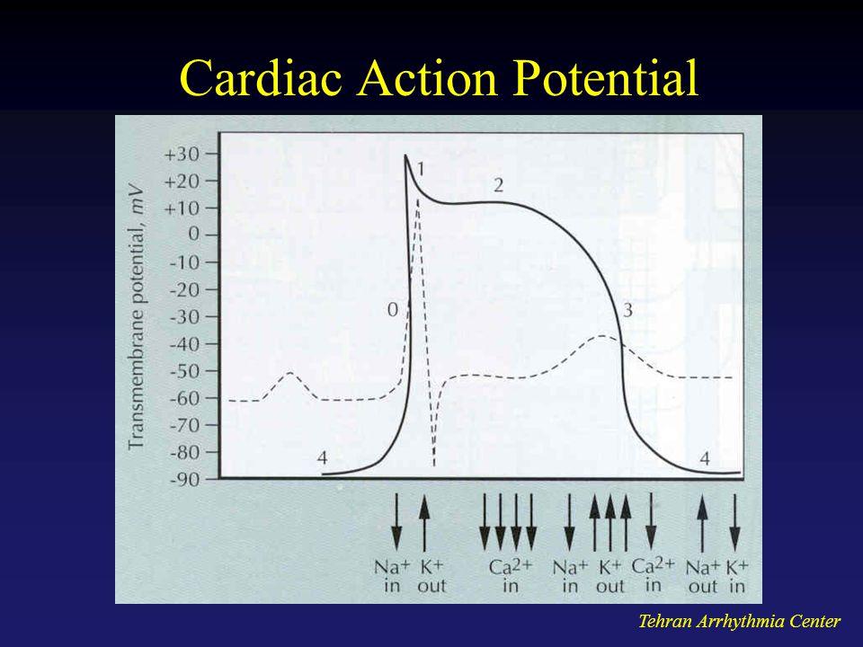 Tehran Arrhythmia Center Cardiac Action Potential
