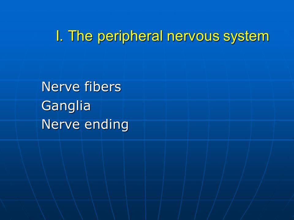 I. The peripheral nervous system Nerve fibers Ganglia Nerve ending