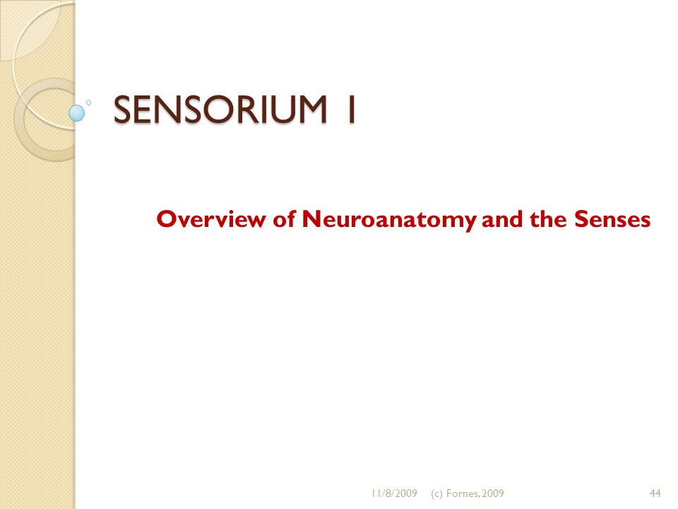 SENSORIUM 1 Overview of Neuroanatomy and the Senses 11/8/200944(c) Fornes, 2009