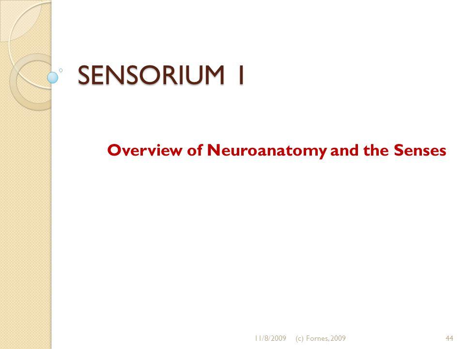 SENSORIUM 1 Overview of Neuroanatomy and the Senses 11/8/200944(c) Fornes, 2009