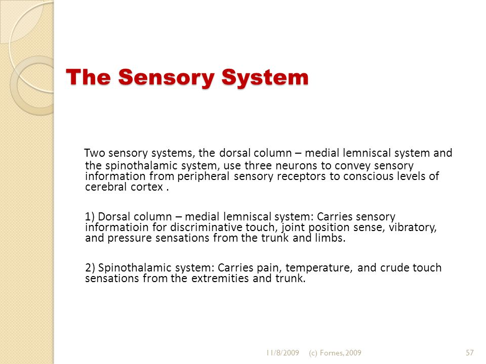 The Sensory System Two sensory systems, the dorsal column – medial lemniscal system and the spinothalamic system, use three neurons to convey sensory information from peripheral sensory receptors to conscious levels of cerebral cortex.