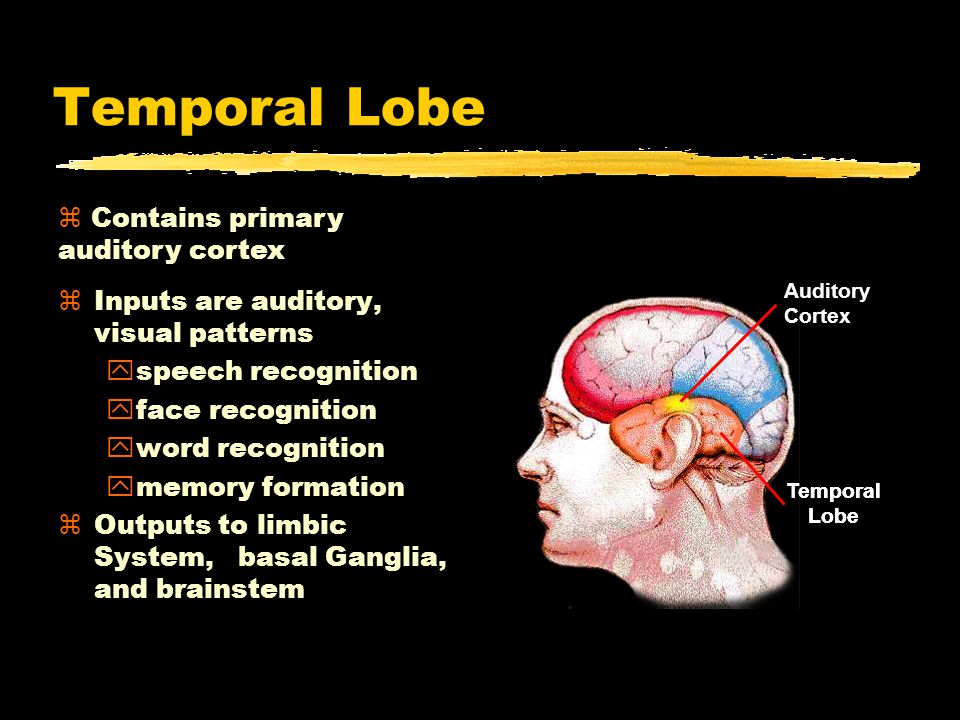 Temporal Lobe zInputs are auditory, visual patterns yspeech recognition yface recognition yword recognition ymemory formation zOutputs to limbic Syste
