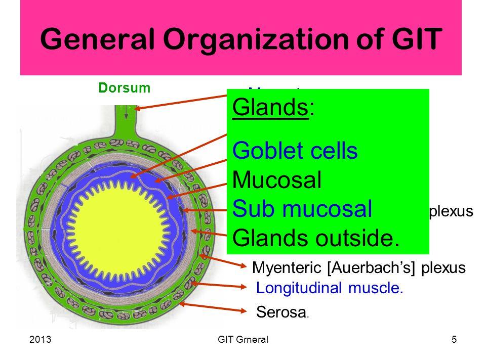 2013GIT Grneral5 General Organization of GIT Serosa.