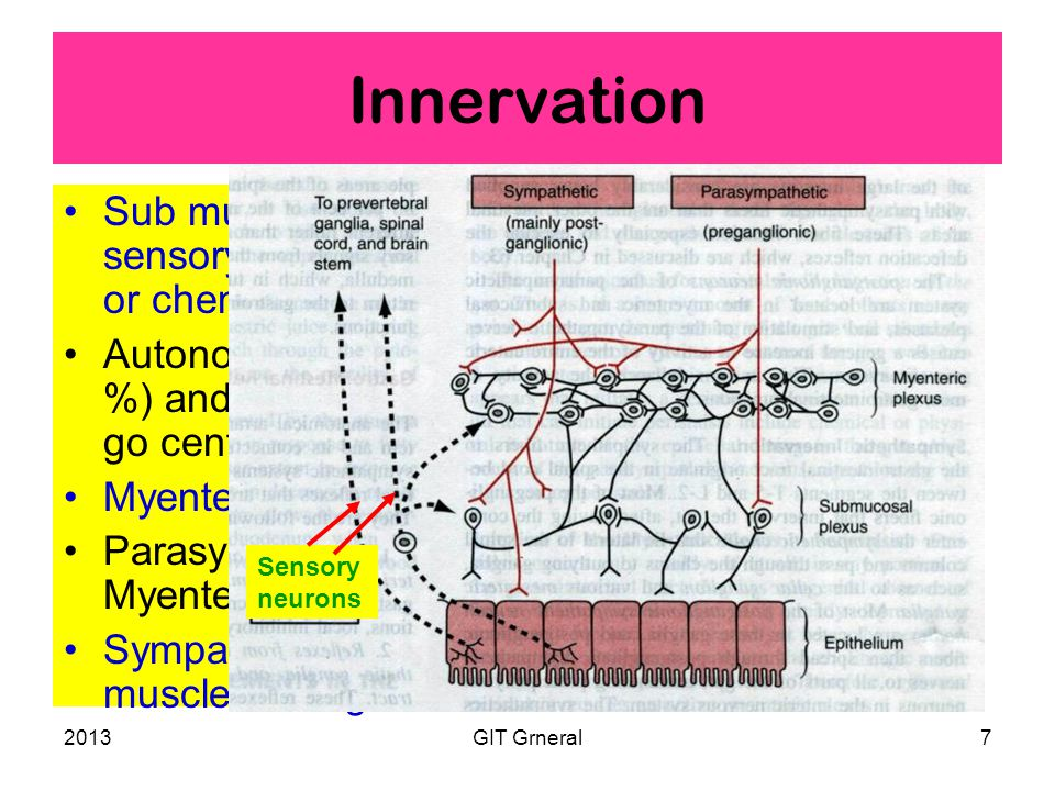 2013GIT Grneral7 Innervation Sub mucus [Meissner's] plexus is mainly sensory - stimulated by, irritation, distention or chemicals.
