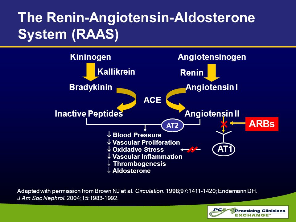 Adapted with permission from Brown NJ et al. Circulation. 1998;97:1411-1420; Endemann DH. J Am Soc Nephrol. 2004;15:1983-1992. The Renin-Angiotensin-A