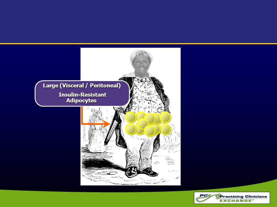 Large (Visceral / Peritoneal) Insulin-Resistant Adipocytes Insulin-Resistant Adipocytes