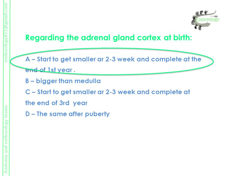 Anatomy and embryology teams embryology433@gmail.com Regarding the adrenal gland cortex at birth: A – Start to get smaller ar 2-3 week and complete at the end of 1st year.