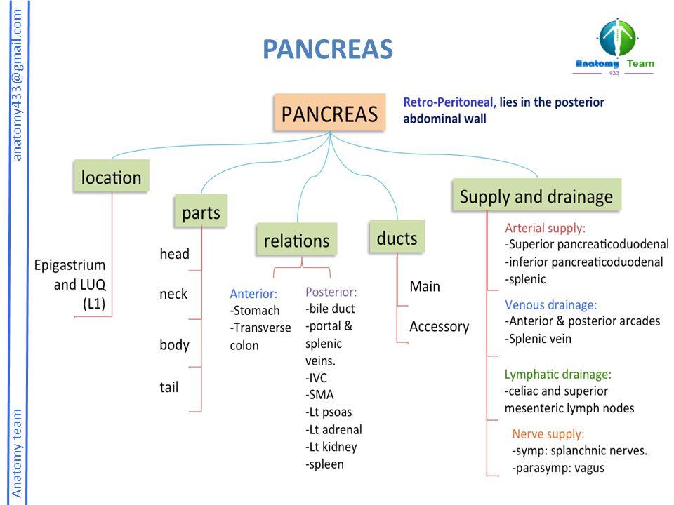 Anatomy team anatomy433@gmail.com PANCREAS