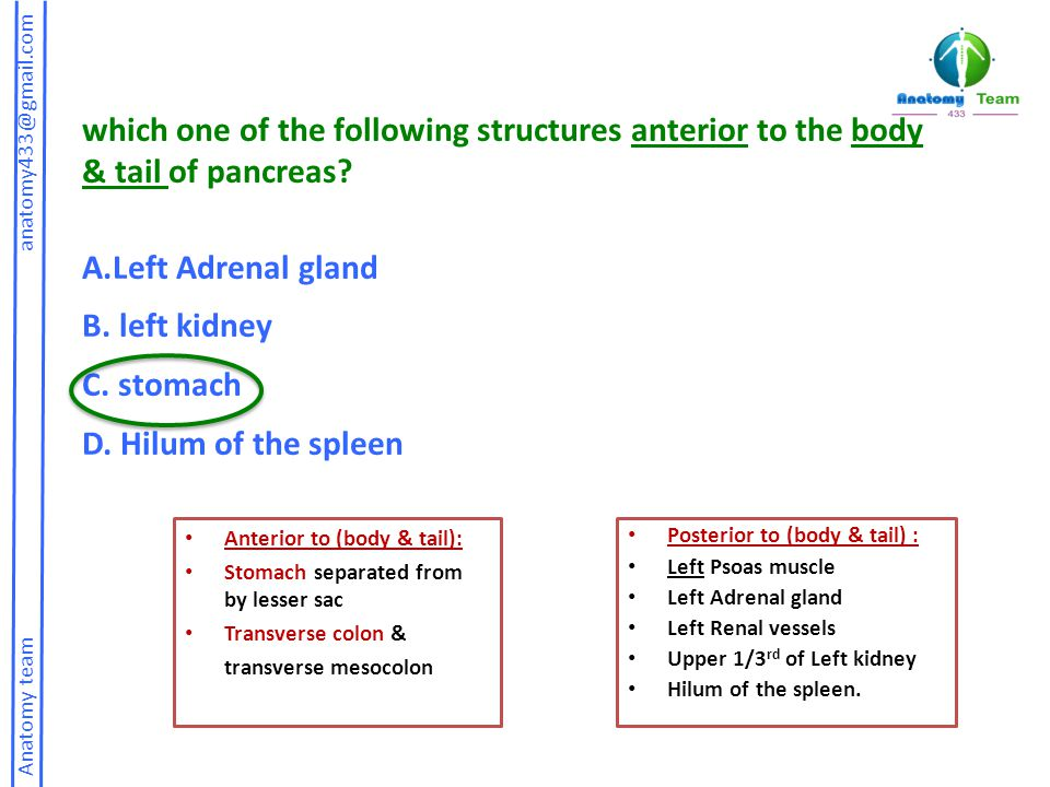 Anatomy team anatomy433@gmail.com which one of the following structures anterior to the body & tail of pancreas.