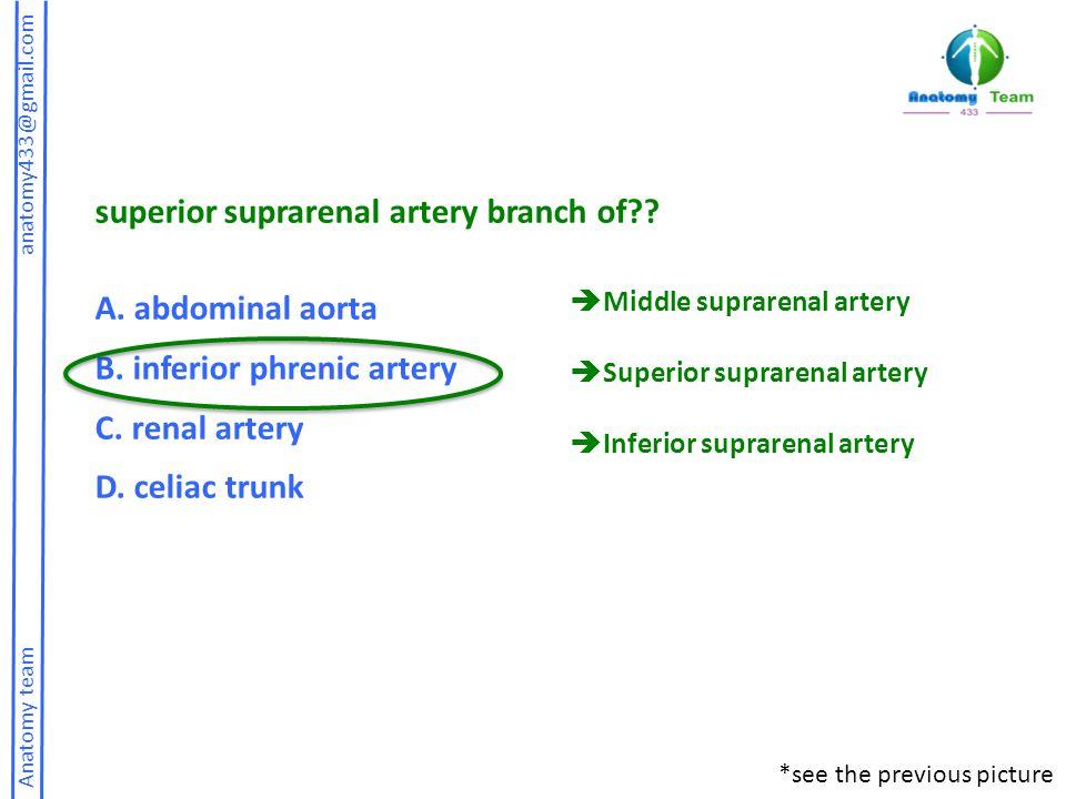 Anatomy team anatomy433@gmail.com superior suprarenal artery branch of?.