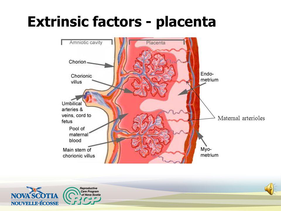 Extrinsic factors Maternal influences: pO 2 – respiratory status, smoking O 2 carrying capacity – Hgb, blood volume Uterine blood flow – circulation,